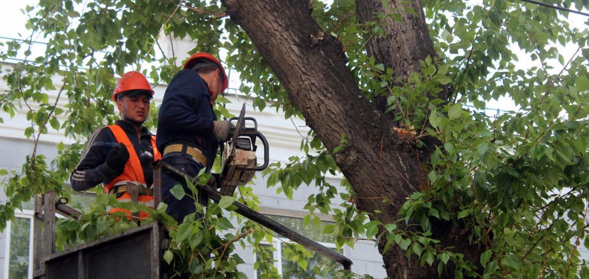 Обрезка деревьев в Иркутске. Автор фото — Виктория Чистякова