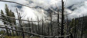 «После пожаров на десятилетие уничтожена кормовая база для животных»