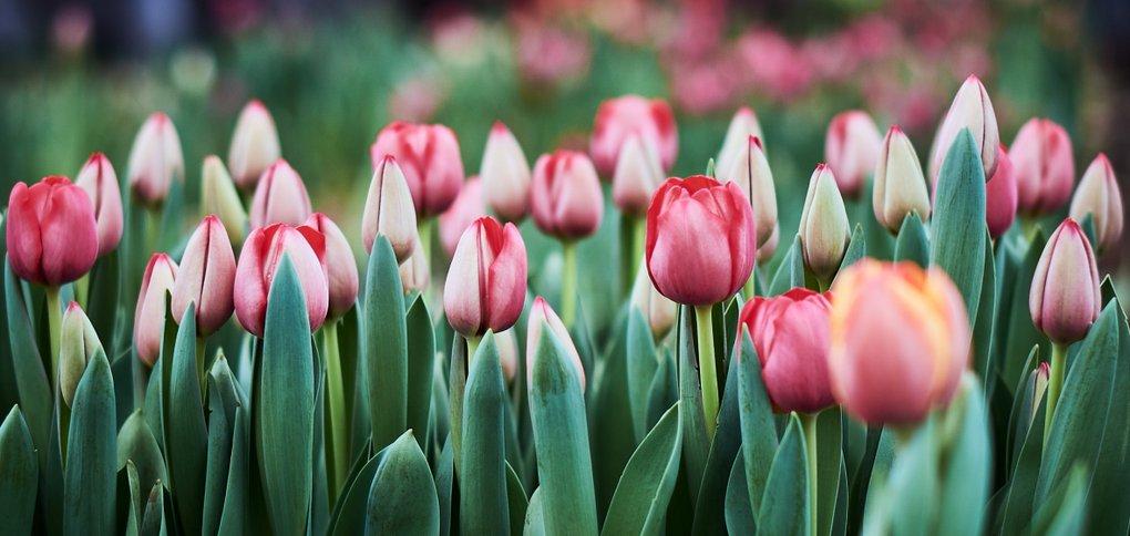 В теплице уже вовсю идут работы по срезке цветов.
