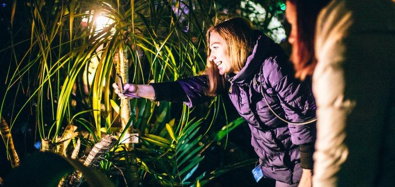 Вечерняя прогулка по оранжерее состоялась в пятницу, 13 октября.