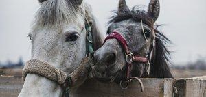 Конные соревнования: дети и пони