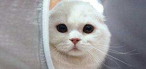 Выставка кошек во дворце спорта «Труд»