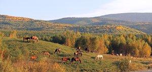Клуб путешественников: осень в Тункинской долине