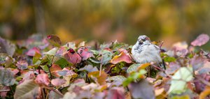 Осень в Иркутске