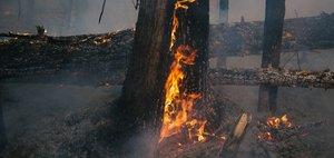 Лесные пожары на севере Иркутской области