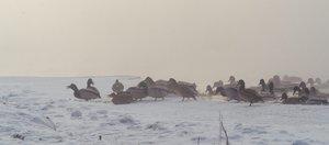Морозное утро в Иркутске