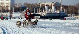 Гонка на собачьих упряжках Baikal Race
