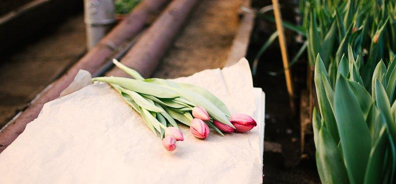 Ко Дню святого Валентина в Горзеленхозе зацвели тюльпаны.