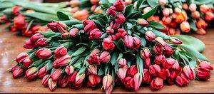 Тюльпаны. С любовью к иркутянкам