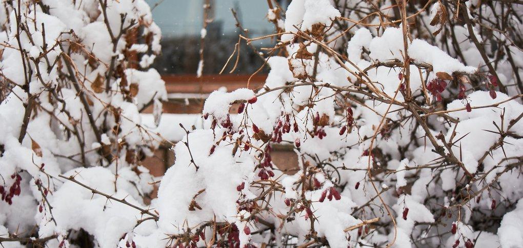 В город вернулась зима.