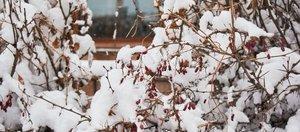 Фотопрогулка по Иркутску: апрельский снегопад