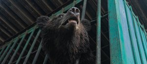Пятерых медведей выпустили на волю из питомника «К-9»