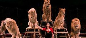 «Я на солнышке лежу». Что вы знаете о знаменитых львах?