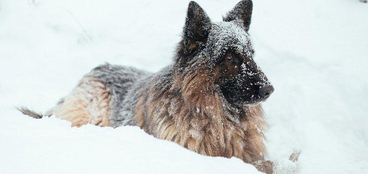 Подготовься к наступающему году Собаки.